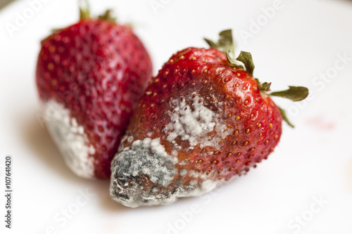 Fotografie, Obraz  mold on strawberries