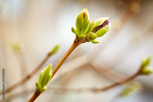 Fotografía First spring buds