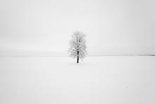 Lonely Tree ,  Snow.