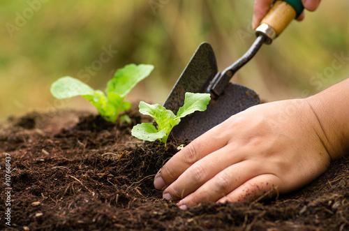 Photo  Farmer planting sapling into soil