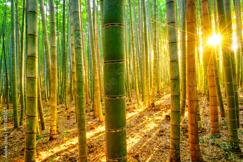 Poster Bamboe Bamboo forest with sunny in morning