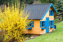 Children Wooden Playhouse In Backyard Garden After Rain With Blooming Forsythia In The Spring