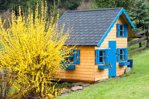 Fototapeta children wooden playhouse in backyard garden after rain with blooming forsythia
