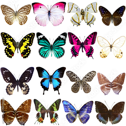 Fotografering  Collection of beautiful tropical butterflies isolated on white
