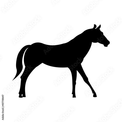Fotografie, Obraz  Wild horse silhouette