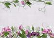 Sweet peas flowers on pretty background