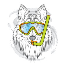 Pedigree Dogs Painted By Hand. Collie Wearing A Mask For Diving. Vector Illustration.
