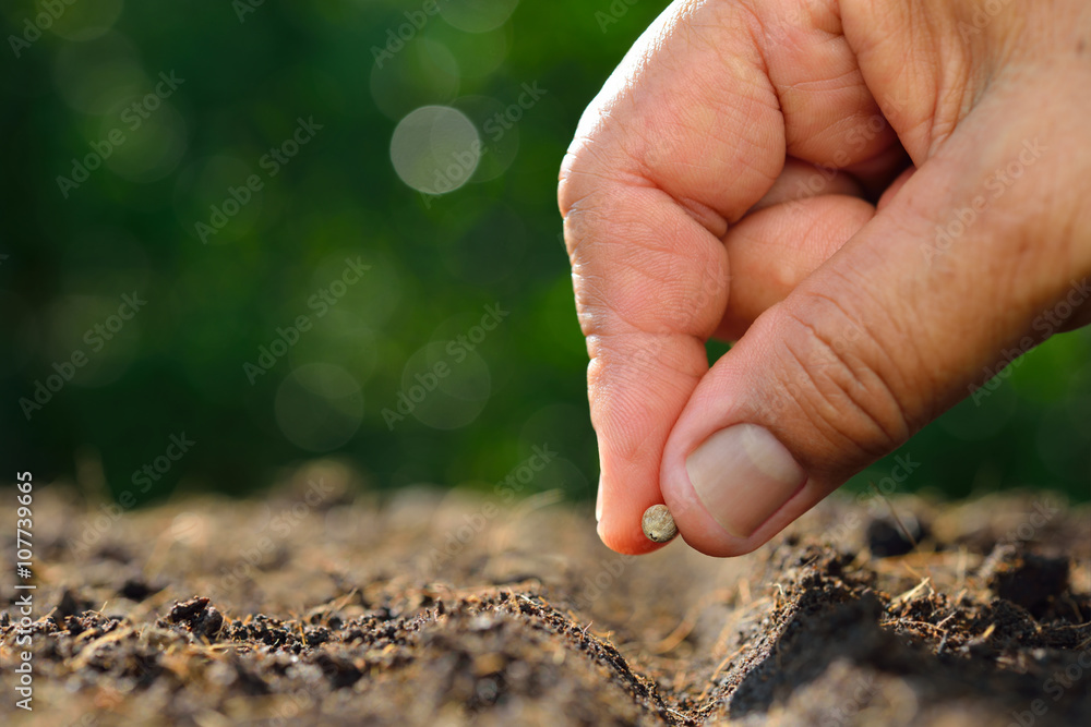 Fototapety, obrazy: Farmer's hand planting a seed in soil