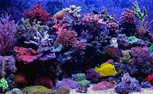 fototapeta na drzwi i meble Amazing Coral Reef Aquarium moment