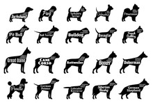 Vector Dog Silhouettes Collection Isolated On White. Dogs Breeds