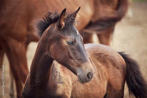 Fotografía  Foal near its mother