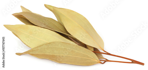 Cassia leaves Fototapeta