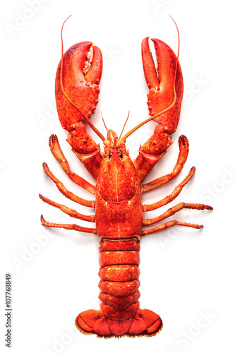 Poster Coquillage Lobster isolated on a white background