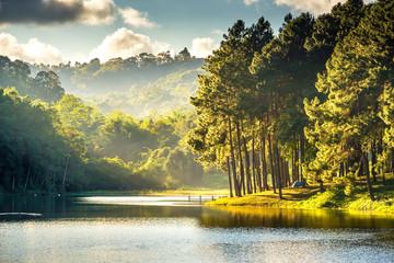 FototapetaBeautiful landscape viwe reflection of pine tree in a lake