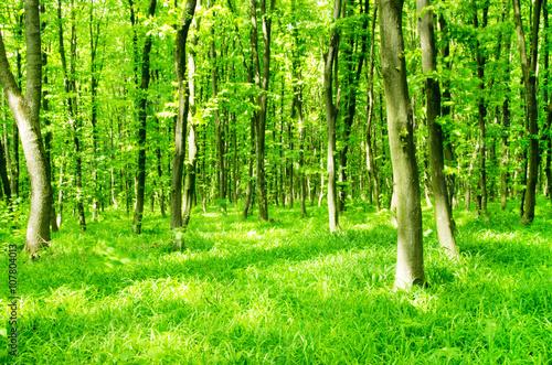 Tuinposter Berkbosje beautiful green forest