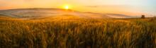 Tuscany Wheat Field Panorama A...