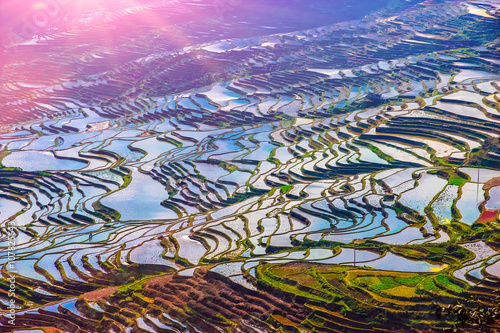 Garden Poster Rice fields Terraced Rice Fields in Water Season in South China at Sunset