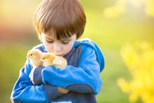 Sweet Cute Child, Preschool Boy, Playing With Little Newborn Chi