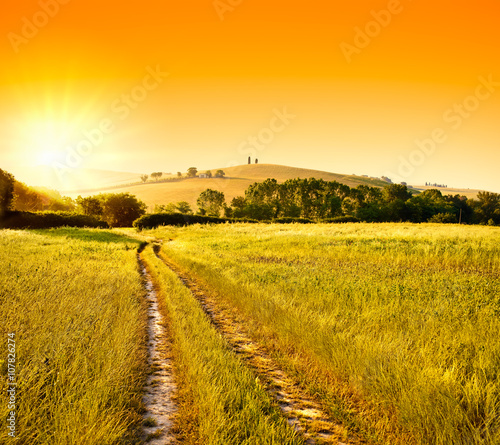 Canvas Prints Honey Tuscany wheat field hill at sunrise