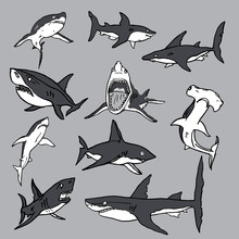 Set Of Sea Sharks EPS Vector For T-shirts