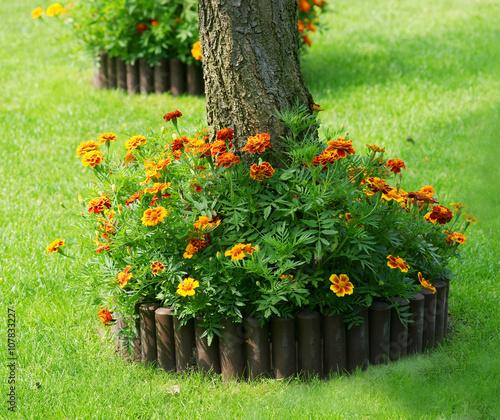 Fotografie, Obraz  Marigold mini flowerbed