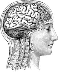 Panel Szklany Do gabinetu lekarskiego/szpitala Vintage anatomical image human brain