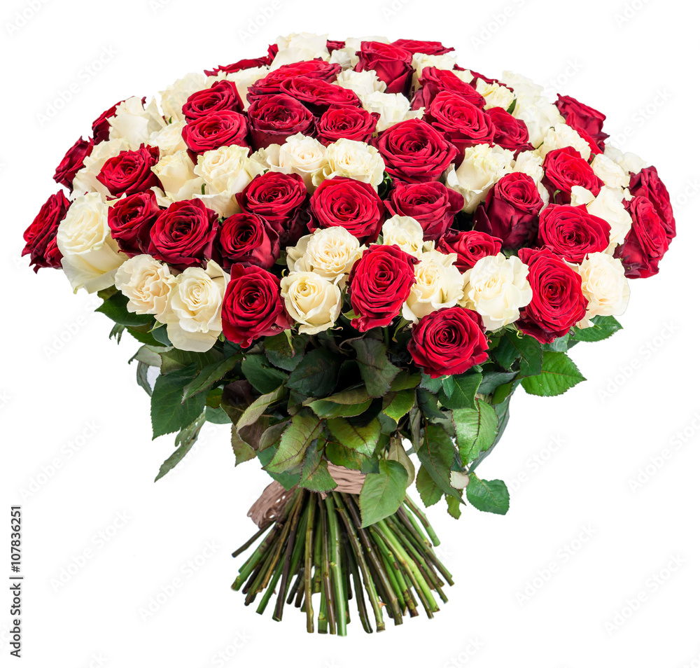 101 Red white rose bouquet isolated on white background