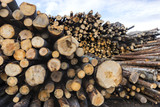 stack of timber - 107841041