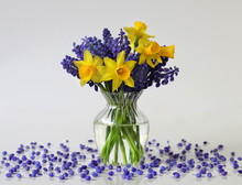 Bouquet Of Spring Daffodils And Grape Hyacinth Flowers In A Vase. Floral Still Life With Narcissus And Muscari Flowers In A Vase.