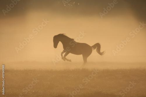 Canvas Prints Horses Paard in de mist, toonbeeld van kracht