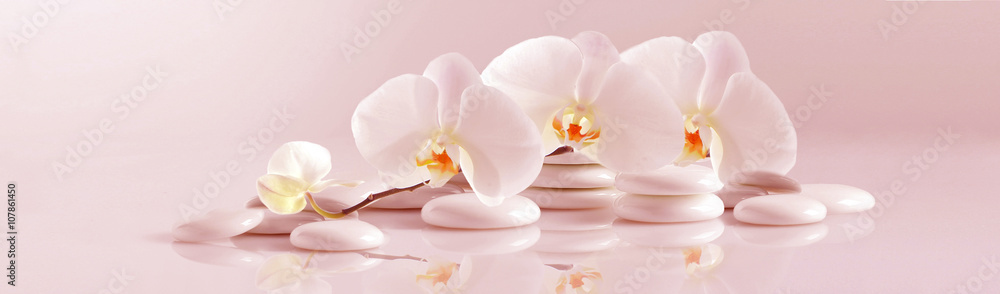 White Orchid with white pebbles on the pale pink background. Panoramic image