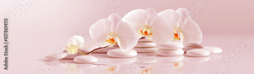 Fototapeta White Orchid with white pebbles on the pale pink background. Panoramic image obraz