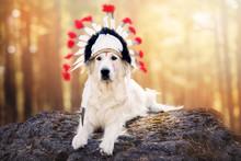 Golden Retriever Dog In A Nati...