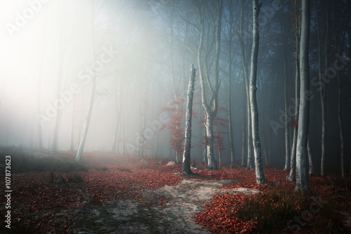 Foto auf Gartenposter Wald Light through the trees in foggy forest