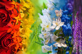 Fototapeta Tęcza - Colorful rainbow of flowers