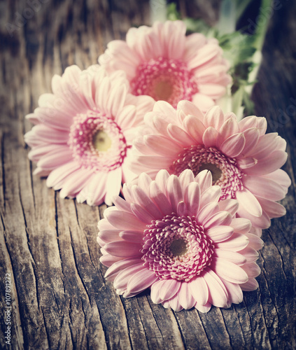 Poster Gerbera Beautiful pink gerbera flowers. Toned image