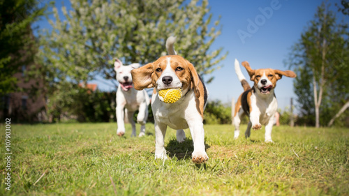 Fotografia Group of dogs playing in the park