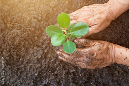 Man hands planting the young tree while working in the garden Fototapeta