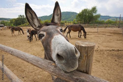Foto op Canvas Ezel Funny donkey
