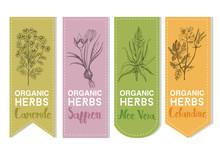 Organic Herbs Label Of Camomile Saffron Aloe Vera Celandine