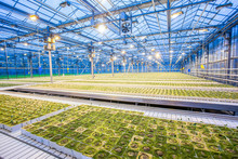 Bright Lights At The Greenhouse