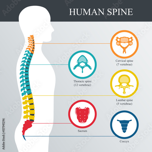 Fotografia  Spine diagnostics symbol design