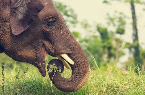 Foto op Canvas Olifant Elephant in Nepal
