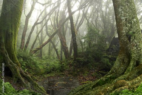 Fotografie, Obraz  Selva de Nepal