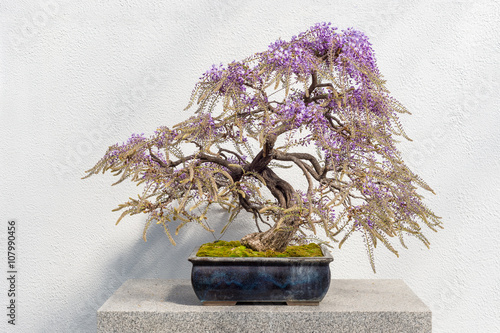 Stickers pour porte Bonsai Blooming Japanese Wisteria Bonsai