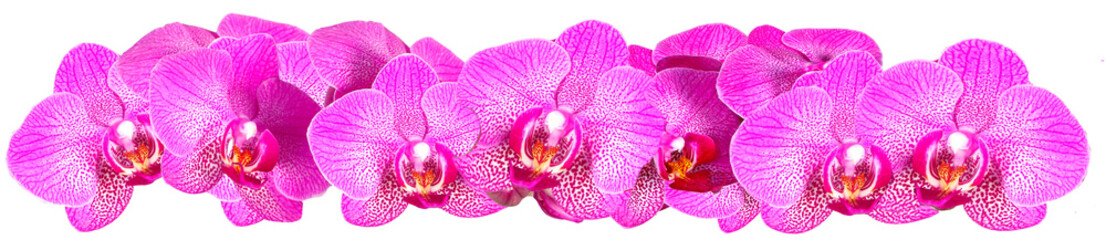 Panel Szklany Storczyki Pink Orchid on white background panorama