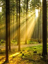 Sun Rays Shining Through Forest