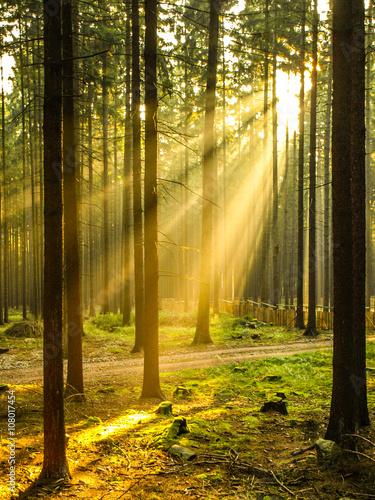 Promienie słońca wpadające przez las