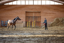 Training Of Sport Horse