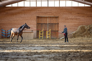 Training of sport horse